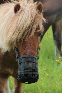 Bild Pony mit Weidemaulkorb