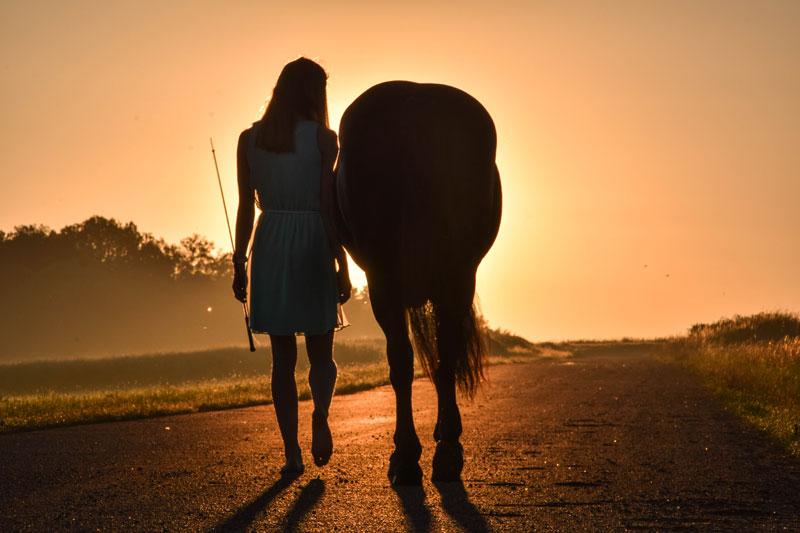 Gemeinsam mit Ihrem Pferd einen neuen Weg gehen