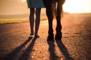 pferd fuss