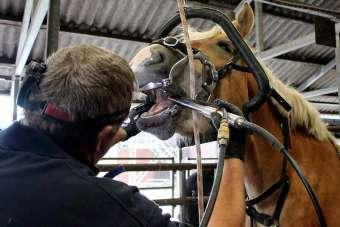pferdezahnarzt-klaus-meyer-behandung-pferd-8dbbeae1