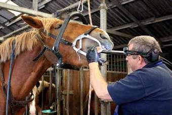 pferdezahnarzt-klaus-meyer-nachbehandung-ffff104b